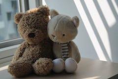 L'ours de Brown et le chaton jouent se reposer par la fenêtre dans les ombres Photo stock