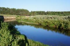 L'ours de rivière dans la région de Tver Image libre de droits