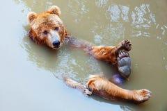 L'ours Photos libres de droits
