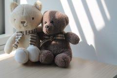 L'ours et le chaton jouent se reposer par la fenêtre dans les ombres Photos stock