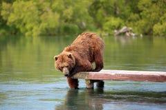 L'ours pêche sur le lac Image stock