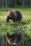 L'ours par le lac Photographie stock