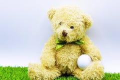 L'ours tient la boule de golf se repose sur le cours vert Photos libres de droits
