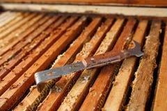 L'outil d'apiculteur s'étend sur la ruche en bois ouverte Rassemblez le miel Concept de l'apiculture images stock