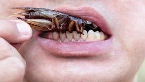 L'ouverture masculine sa bouche pour manger des insectes Le concept de proteus photographie stock