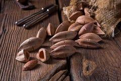L'ovatum de Canarium, généralement connu sous le nom de pili est des espèces de tropica Photographie stock libre de droits
