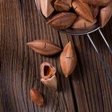 L'ovatum de Canarium, généralement connu sous le nom de pili est des espèces de tropica Image libre de droits