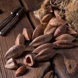 L'ovatum de Canarium, généralement connu sous le nom de pili est des espèces de tropica Photographie stock