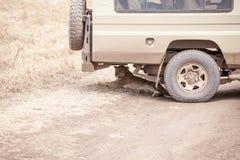 L'petit animal de Lion Panthera Leo se trouve sous la jeep de safari photo stock