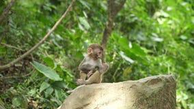 L'petit animal de singe mange la feuille verte clips vidéos