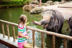?l?phant d'alimentation d'enfants dans le zoo Famille au parc animalier photographie stock