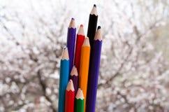 L?pis coloridos com listras pintadas em seguida Cores da natureza Pastéis com os abricós de florescência no fundo A natureza cria fotos de stock