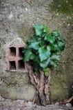 L'potenza della natura Una pianta che batte il calcestruzzo fotografia stock libera da diritti