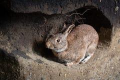 L?s kanin i en h?la royaltyfria bilder
