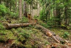 l?s naturskog i Joffre Lakes Provincial Park British Columbia Kanada arkivfoto