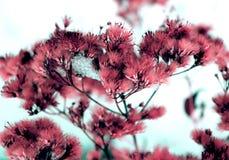 L?sa fluffiga blommor och stammar av torrt d?tt gr?s under den dynamiska sammans?ttningen f?r solform p? en sn? stock illustrationer