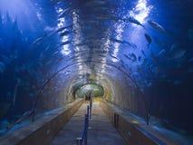 L sikt för `-Oceanografic akvarium i Valencia Spain royaltyfria bilder