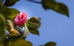 l?ter vara den gr?na illustrationen f?r blomman den rosa vektorn royaltyfri foto