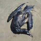 L'uccello è morto da industria petrolifera Immagini Stock Libere da Diritti