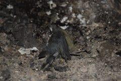 L'uccello è morto in fuoco di asfissia Fotografie Stock