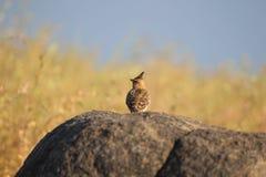 L'uccello è sedentesi e guardante verso l'acqua immagine stock libera da diritti