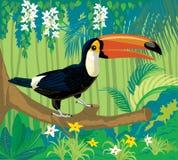 L'uccello è un tucano in natura Fotografie Stock Libere da Diritti
