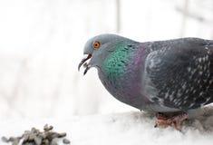L'uccello Fotografia Stock