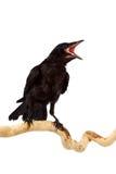 L'uccello Immagini Stock Libere da Diritti