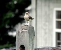 L'uccello in anticipo ottiene il verme Fotografia Stock Libera da Diritti