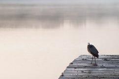 L'uccello in anticipo pesca il pesce Fotografia Stock Libera da Diritti