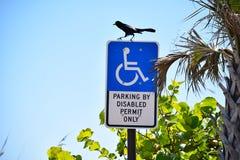 L'uccello cammina in punta di piedi sul segno di parcheggio handicappato fotografia stock