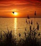 L'uccello che attraversa il lago Fotografia Stock Libera da Diritti