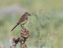 L'uccello con la preda Fotografia Stock Libera da Diritti
