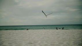 L'uccello del gabbiano decolla sorvolare l'oceano Pacifico Movimento lento stock footage