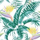 L'uccello del paradiso lascia a colore blu il modello senza cuciture tropicale Immagini Stock Libere da Diritti