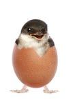 L'uccello di bambino felice ha covato dall'uovo immagine stock