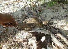 L'uccello di mare ha ottenuto l'acqua fotografie stock