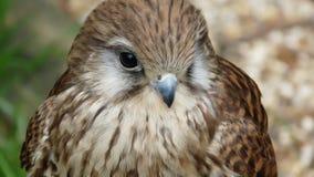 L'uccello di prega Fotografia Stock