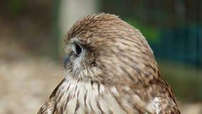 L'uccello di prega fotografie stock