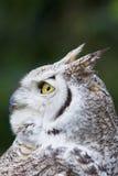 L'uccello di prega Fotografie Stock Libere da Diritti