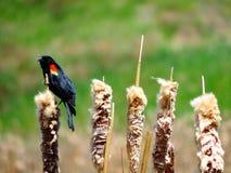 L'uccello di seduta Immagine Stock