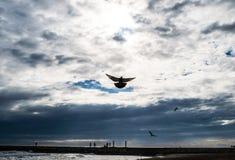 L'uccello di Spirito Santo vola in cielo blu, luce intensa splende da cielo, pilotante il piccione immagini stock