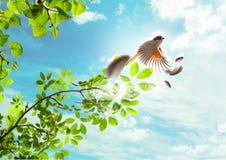 L'uccello di volo Fotografia Stock