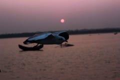 L'uccello di volo Immagini Stock