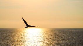 L'uccello espande la sua ala per sorvolare il mare a Riomaggiori Fotografie Stock