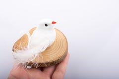 L'uccello falso su un ceppo di legno ha tagliato nei pezzi sottili rotondi su backgr bianco Immagini Stock