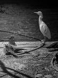 L'uccello fissa la luce Fotografia Stock