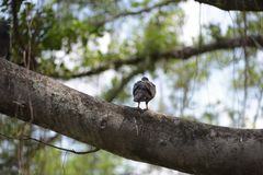 L'uccello gira indietro si siede su un albero fotografia stock