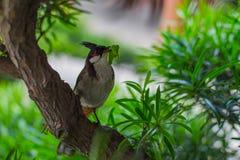 L'uccello ottiene il verme Immagini Stock Libere da Diritti