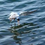 L'uccello ottiene l'alimento Fotografia Stock Libera da Diritti